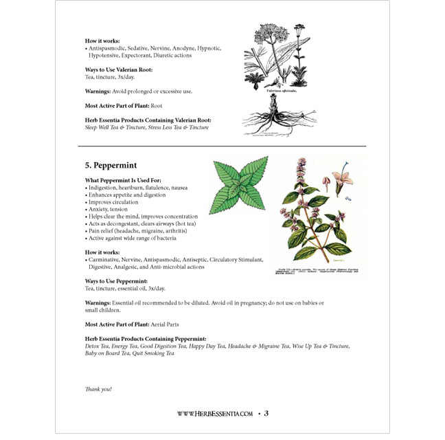 Herb Essentia workshop