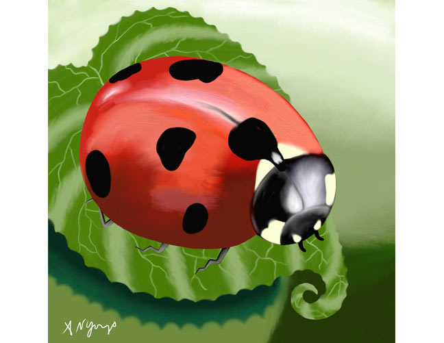 Ladybug on Leaf, A. Nicola