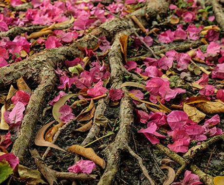 Roots and Petals